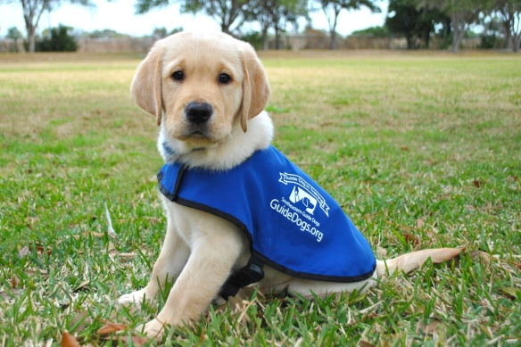 Southeastern-Guide-Dogs-Puppy.jpg